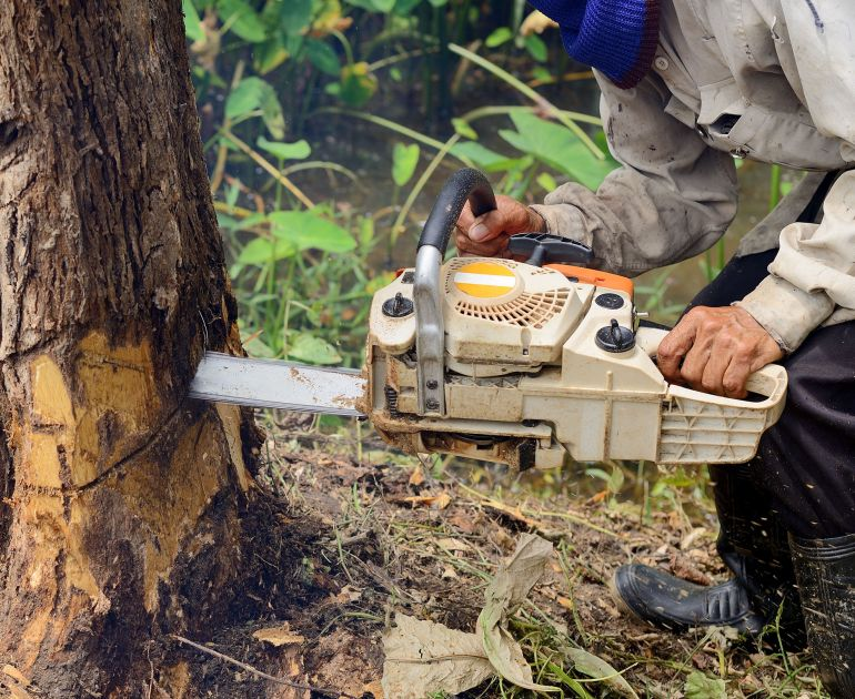 A Tree Removal Services In Melbourne